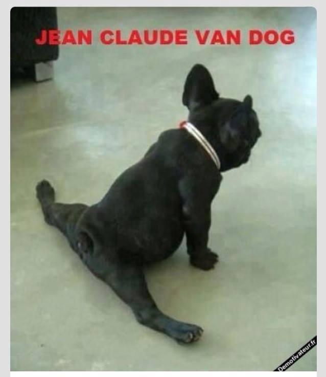 Name:  VAN DOG.jpg Views: 430 Size:  29.0 KB
