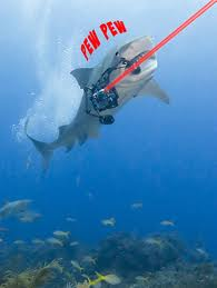 Name:  sharks with lasers.jpg Views: 383 Size:  5.5 KB